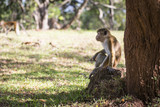 Monkey under the tree