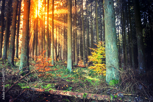 Fotobehang Betoverde Bos Autumn landscape with sunset in forest