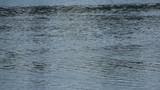 water ripple at summer river
