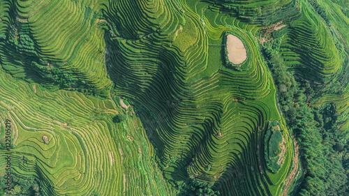Plexiglas Rijstvelden Top view or aerial shot of fresh green and yellow rice fields.Longsheng or Longji Rice Terrace in Ping An Village, Longsheng County, China.