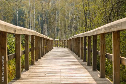 Fototapete waldweg  Waldweg Fototapete günstig kaufen | Fototapeten | Bildtapete ...