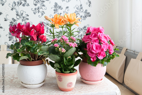 Several potted flowers are on table in the room