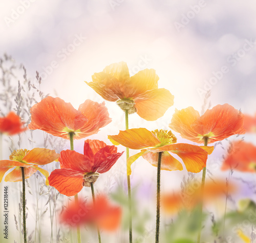 Deurstickers Klaprozen Poppy Flowers Blossom