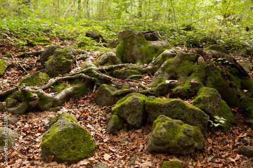 Rocas en el bosque Poster
