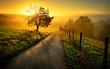 Leinwandbild Motiv Idyllische Landschaft bei Sonnenaufgang, mit Weg und Baum auf der Wiese
