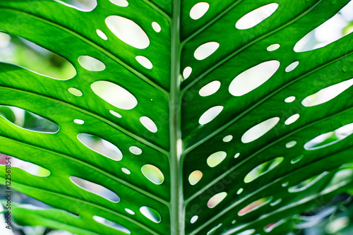 Poster Unique tropical green leaf