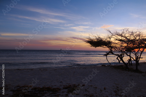 Poster Aruban Sunset with Divi Divi Tree and Sailboat