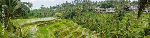 Tuinposter Rijstvelden Panorama sur les rizières de Tegalalang, Bali, Indonésie
