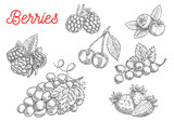 Fototapety Summer fruit and berry sketch for food design