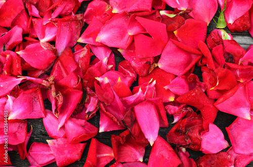 Staande foto Roses Bright red rose