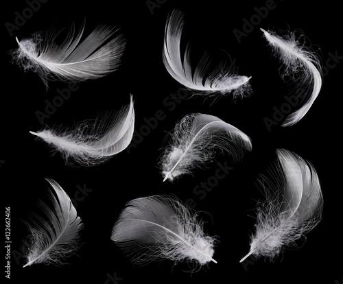 Kolekcja biały piórko odizolowywający na czarnym tle