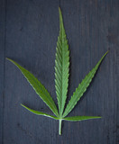 Marijuana Leaf - Isolated