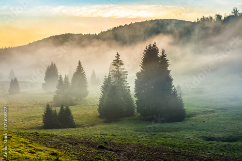 foggy morning in conifer forests at sunset - 122689822