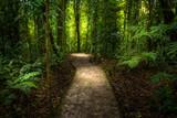 Fototapety Jungle path