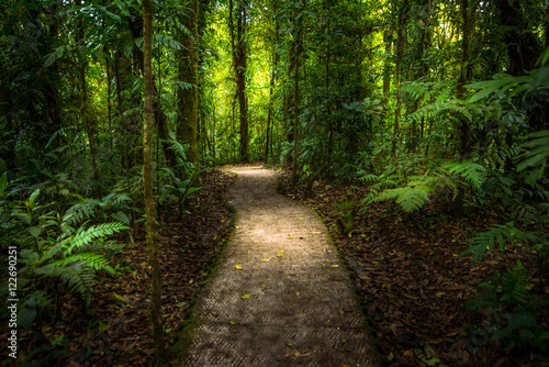 Foto op Canvas Zwart Jungle path