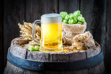 Light beer with foam, hops and wheat - 122698654