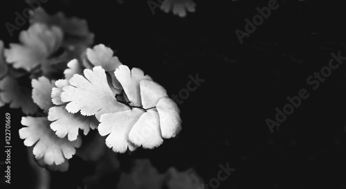 Black and White of Ferns Background.