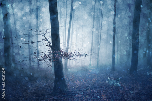 Magical blue colored foggy forest fairytale with bokeh. Fantasy colored autumn woodland. Color filter effect used.