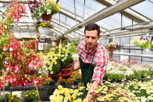 Gärtner mit Blumen in einem Gewächshaus // Gardener with flowers in a greenhouse