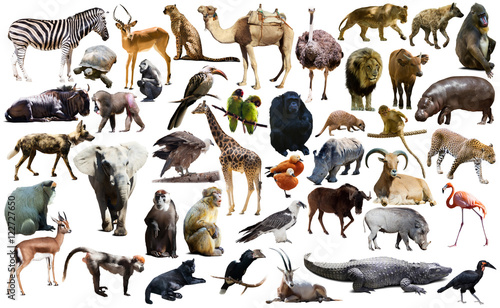 Fotobehang Bison Birds, mammal and other animals of Africa isolated
