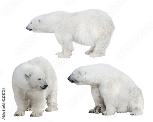Aluminium Ijsbeer set of three white polar bears