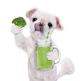 Dog holding smoothie in a  mug  isolated on white.