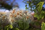 duvet de fleurs sauvages