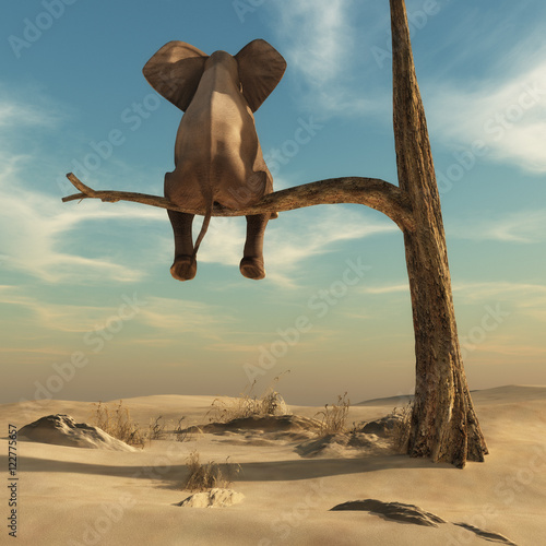 Leinwandbild Motiv Elephant stands on thin branch of withered tree