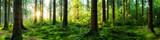 Verträumter Sonnenaufgang im herbstlichen Wald - 122789614