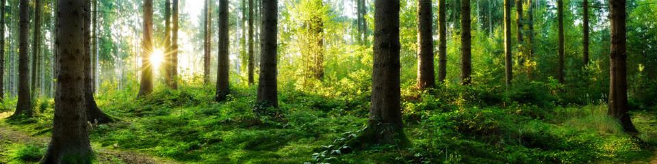 Verträumter Sonnenaufgang im herbstlichen Wald © John Smith