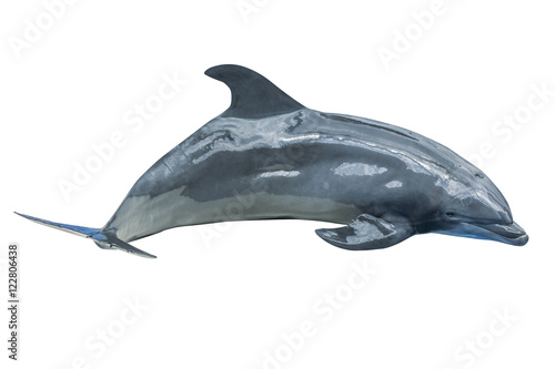 Fotobehang Dolfijn A cute Dolphin with wet body jumping. Isolated on white background.