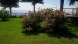 cespuglio di rose rosse
