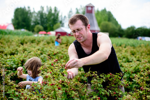 Man picking berries with children Poster