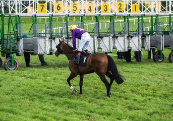 Race horse and jockey running towards starting gate before the race
