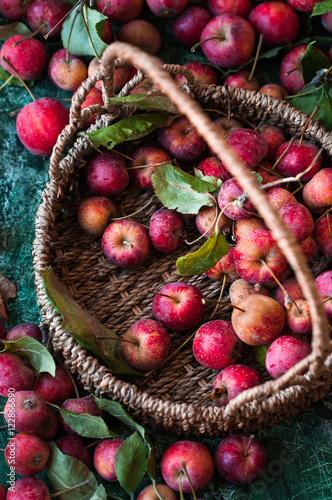 Panier avec de petites pommes sauvages rouges et d'autres dispersés sur une  Poster
