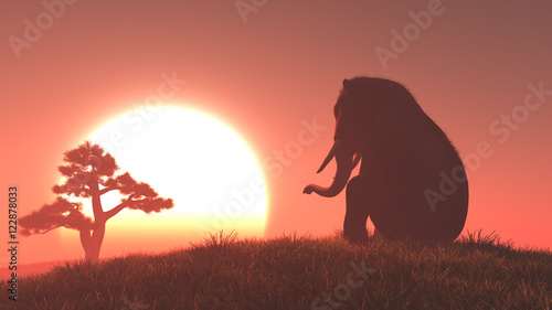 Poster Koraal Silhouette of elephant and tree