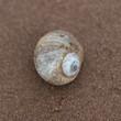 Seashell on the beach, Victoria, Prince Edward Island, Canada