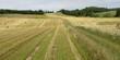Hay bales in a field, Kensington, Prince Edward Island, Canada