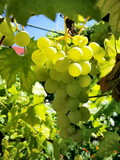 Close up of bunch of grapes on sunlight