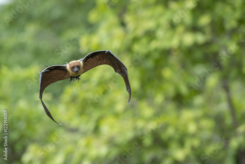 Flying bat Poster