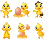 Set of cute cartoon baby chick