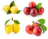 collection of cherry plums isolated on the white background