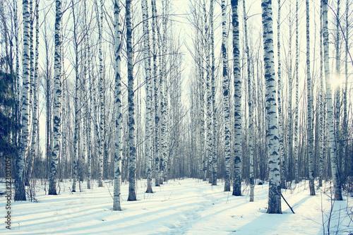 Plexiglas Berkenbos March landscape birch forest background