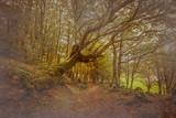 Passaggio segreto nel bosco magico