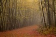 spooky autumn woods