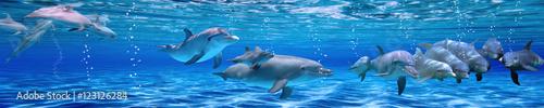 Fototapeta Panorama of Underwater life. Dolphins