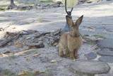 Funny bunny with big ears sits in the yard