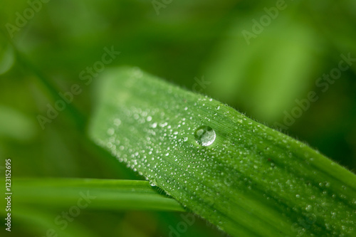 Papiers peints Nature waterdruppel op een grassprietje