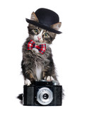 Kitten wearing bow tie and a bowler hat holding the retro photo