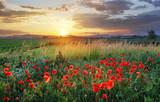 Fototapety Vivid poppy field